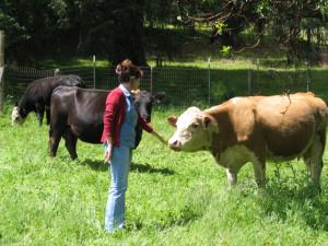 Cow friends!