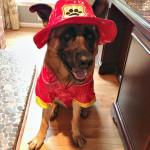 Firedog Sam