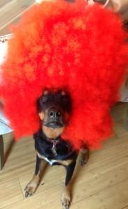 Wally!!!